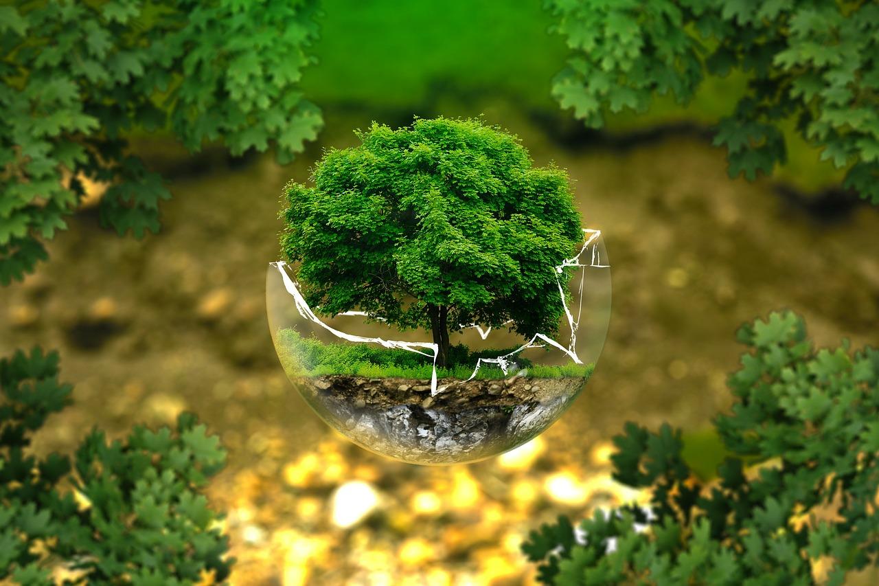 守るべき森