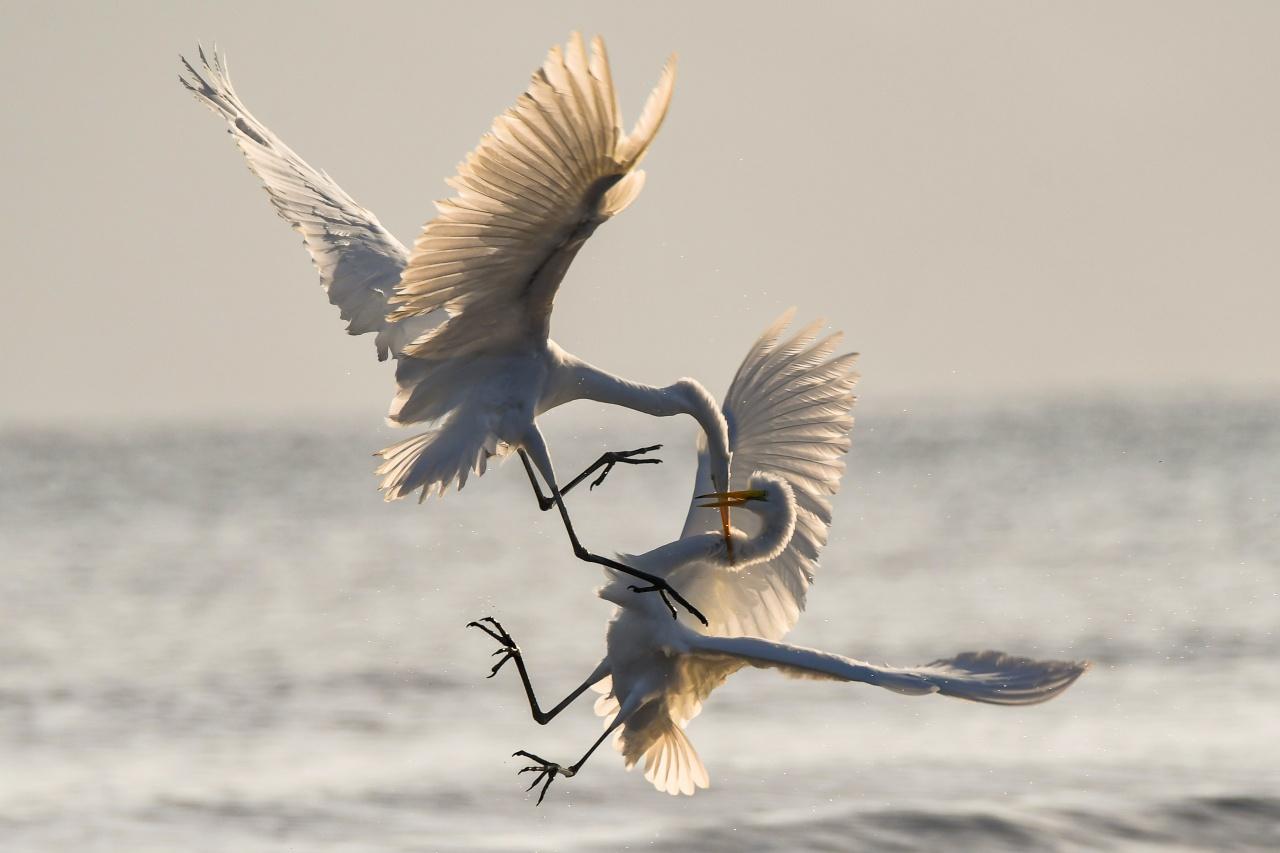 喧嘩する鳥